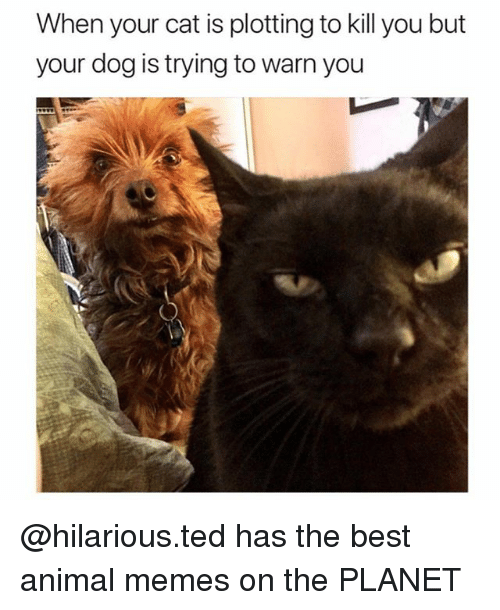 Funny, Memes, and Ted: When your cat is plotting to kill you but  your dog is trying to warn you @hilarious.ted has the best animal memes on the PLANET