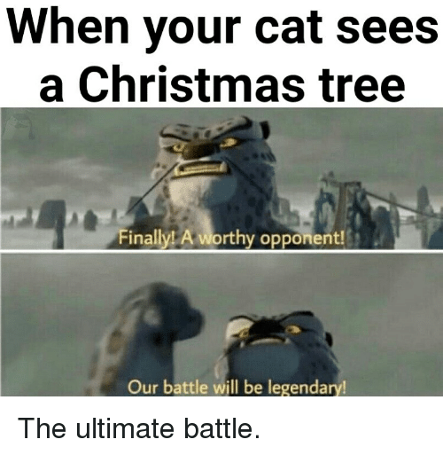 Christmas Tree: When your cat sees  a Christmas tree  nailylL A  Op  Our battle will be legendary The ultimate battle.