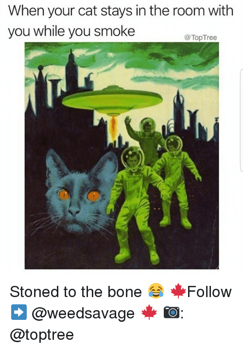 Memes, 🤖, and Cat: When your cat stays in the room with  you while you smoke  @TopTree Stoned to the bone 😂 🍁Follow ➡ @weedsavage 🍁 📷: @toptree