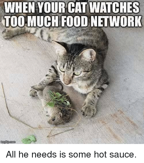 Food, Food Network, and Too Much: WHEN YOUR CAT WATCHES  TOO MUCH FOOD NETWORK All he needs is some hot sauce.