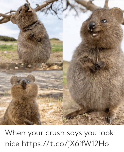Crush, Memes, and Nice: When your crush says you look nice https://t.co/jX6ifW12Ho