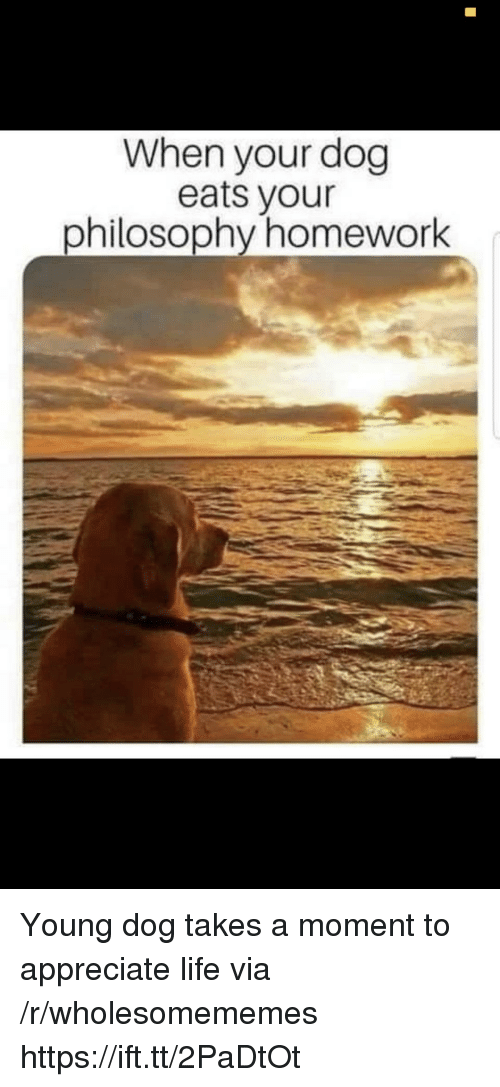 Life, Appreciate, and Homework: When your dog  eats vour  philosoDtly homework Young dog takes a moment to appreciate life via /r/wholesomememes https://ift.tt/2PaDtOt