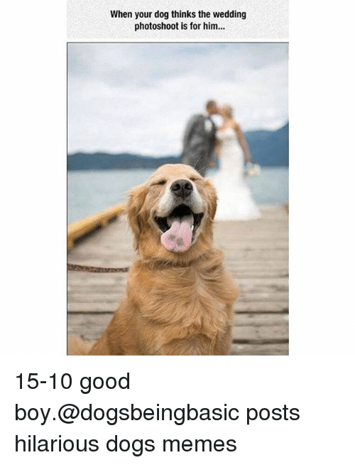 Dogs, Funny, and Memes: When your dog thinks the wedding  photoshoot is for him... 15-10 good boy.@dogsbeingbasic posts hilarious dogs memes