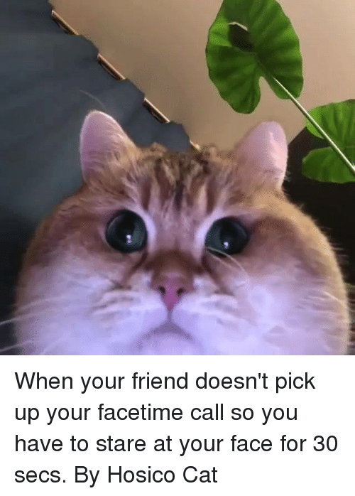 Dank, Facetime, and 🤖: When your friend doesn't pick up your facetime call so you have to stare at your face for 30 secs.  By Hosico Cat