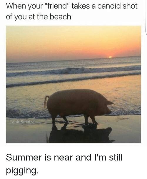 "Memes, Summer, and Beach: When your ""friend"" takes a candid shot  of you at the beach  A  Tank Sinatra Summer is near and I'm still pigging."