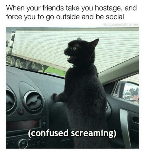 Confused, Friends, and Memes: When your friends take you hostage, and  force you to go outside and be social  Ocabbagecatmemes  CY  00  (confused screaming)