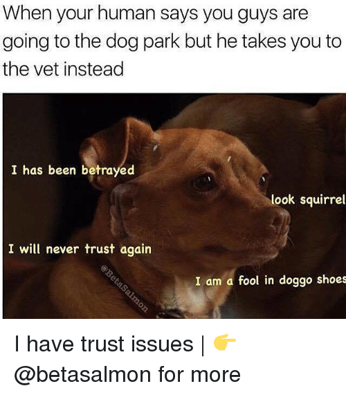 Memes, Shoes, and Squirrel: When your human says you guys are  going to the dog park but he takes you to  the vet instead  I has been betrayed  look squirrel  I will never trust again  I am a fool in doggo shoes I have trust issues   👉 @betasalmon for more