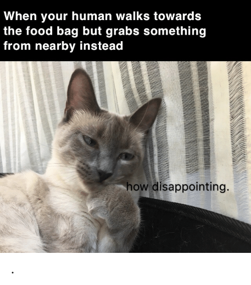 Food, How, and Human: When your human walks towards  the food bag but grabs something  from nearby instead  how disappointing. .