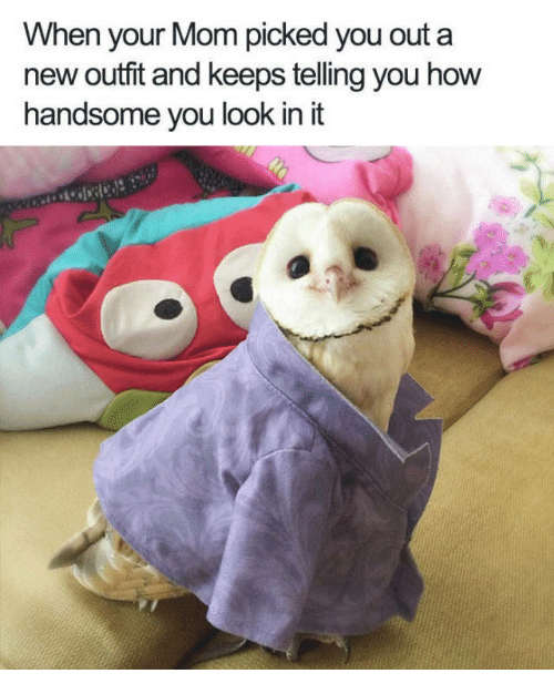 new outfit: When your Mom picked you out a  new outfit and keeps telling you how  handsome you look in it