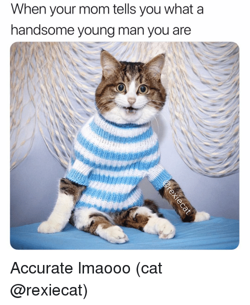 Funny, Mom, and Cat: When your mom tells you what a  handsome young man  you are Accurate lmaooo (cat @rexiecat)
