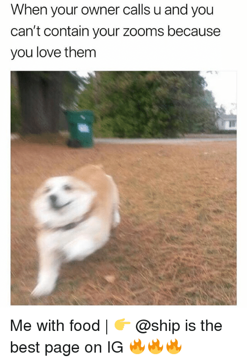 Food, Love, and Memes: When your owner calls u and you  can't contain your zooms because  you love them Me with food | 👉 @ship is the best page on IG 🔥🔥🔥