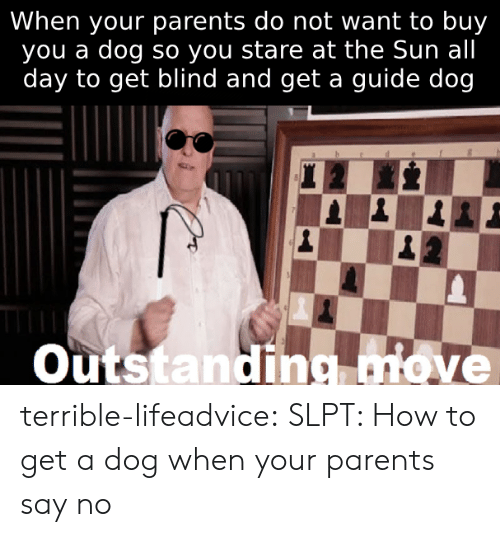 Parents, Tumblr, and Blog: When your parents do not want to buy  you a dog so you stare at the Sun all  day to get blind and get a guide dog  veTTeroP  Outstanding move terrible-lifeadvice:  SLPT: How to get a dog when your parents say no