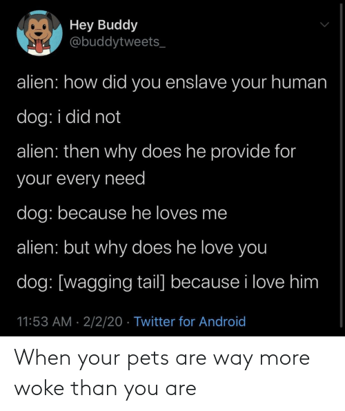 When: When your pets are way more woke than you are