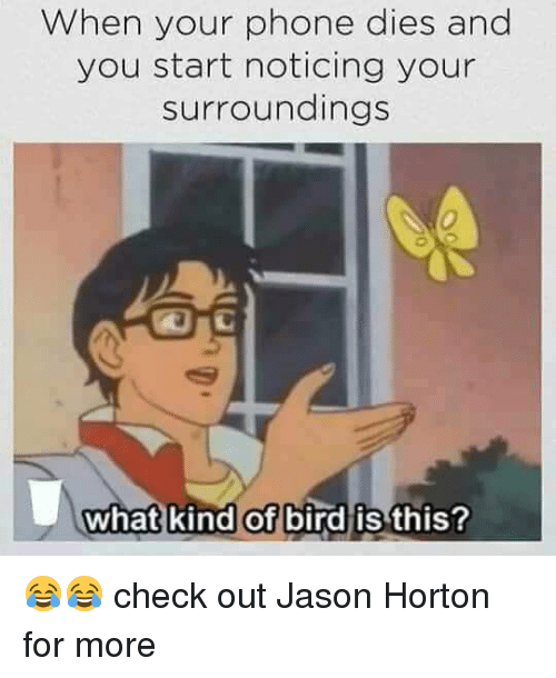 Jason, Check, and  Bird: When your phone dies and  you start noticing your  surroundings  what kind of bird is this? 😂😂 check out Jason Horton for more