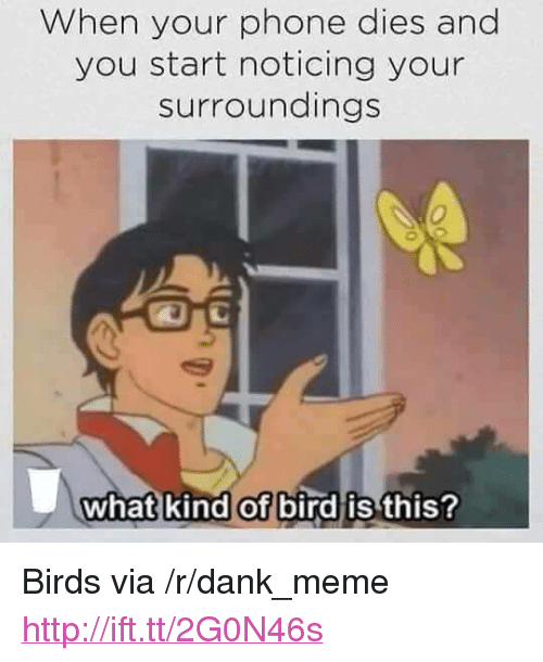 "Dank, Meme, and Phone: When your phone dies and  you start noticing your  surroundings  0  what kind of bird is  this? <p>Birds via /r/dank_meme <a href=""http://ift.tt/2G0N46s"">http://ift.tt/2G0N46s</a></p>"