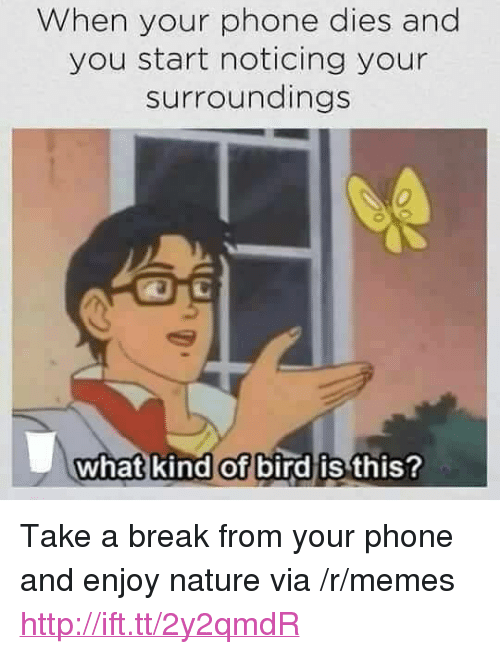 "Memes, Phone, and Break: When your phone dies and  you start noticing your  surroundings  0  what kind of bird is  this? <p>Take a break from your phone and enjoy nature via /r/memes <a href=""http://ift.tt/2y2qmdR"">http://ift.tt/2y2qmdR</a></p>"