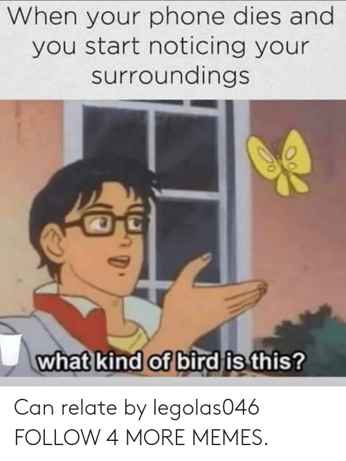 Dank, Memes, and Phone: When your phone dies and  you start noticing your  surroundings  what kind of bird is this? Can relate by legolas046 FOLLOW 4 MORE MEMES.