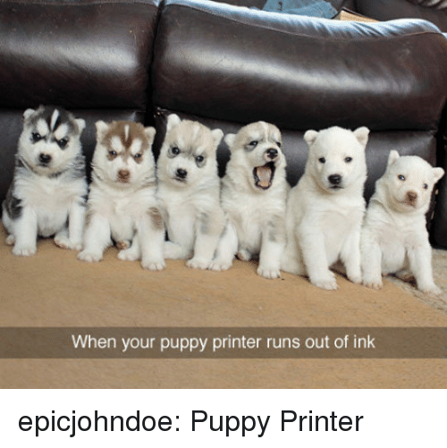Tumblr, Blog, and Puppy: When your puppy printer runs out of ink epicjohndoe:  Puppy Printer