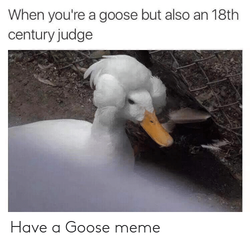 Meme, Judge, and Goose: When you're a goose but also an 18th  century judge Have a Goose meme