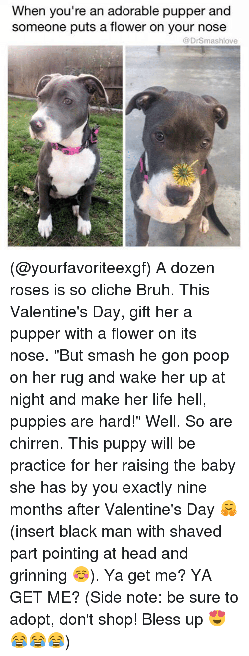 """Bless Up, Memes, and Poop: When you're an adorable pupper and  someone puts a flower on your nose  (a DrSmashlove (@yourfavoriteexgf) A dozen roses is so cliche Bruh. This Valentine's Day, gift her a pupper with a flower on its nose. """"But smash he gon poop on her rug and wake her up at night and make her life hell, puppies are hard!"""" Well. So are chirren. This puppy will be practice for her raising the baby she has by you exactly nine months after Valentine's Day 🤗 (insert black man with shaved part pointing at head and grinning ☺️). Ya get me? YA GET ME? (Side note: be sure to adopt, don't shop! Bless up 😍😂😂😂)"""