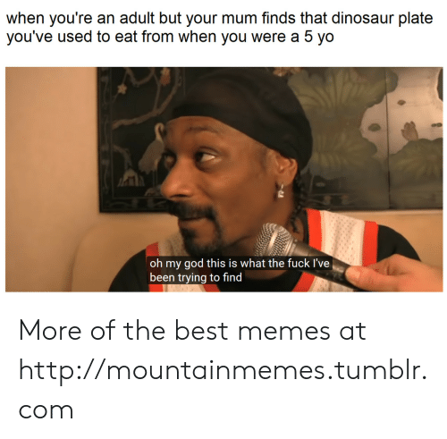 Dinosaur, God, and Memes: when you're an adult but your mum finds that dinosaur plate  you've used to eat from when you were a 5 yo  oh my god this is what the fuck I've  been trying to find More of the best memes at http://mountainmemes.tumblr.com