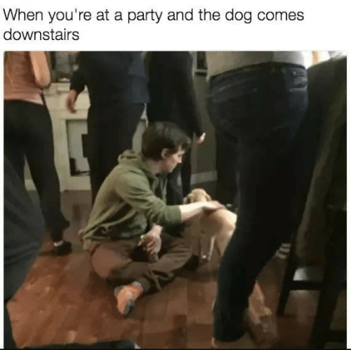 Party, Dog, and The Dog: When you're at a party and the dog comes  downstairs