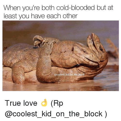 cold blooded: When you're both cold-blooded but at  least you have each other  @coolest kid on the block True love 👌 (Rp @coolest_kid_on_the_block )