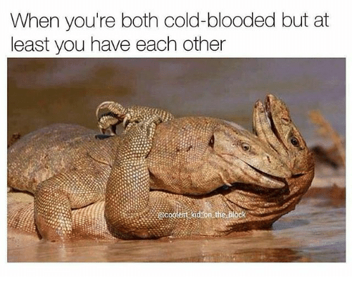 cold blooded: When you're both cold-blooded but at  least you have each other  acodestakidson the block