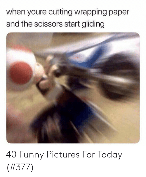 Funny, Pictures, and Today: when youre cutting wrapping paper  and the scissors start gliding 40 Funny Pictures For Today (#377)
