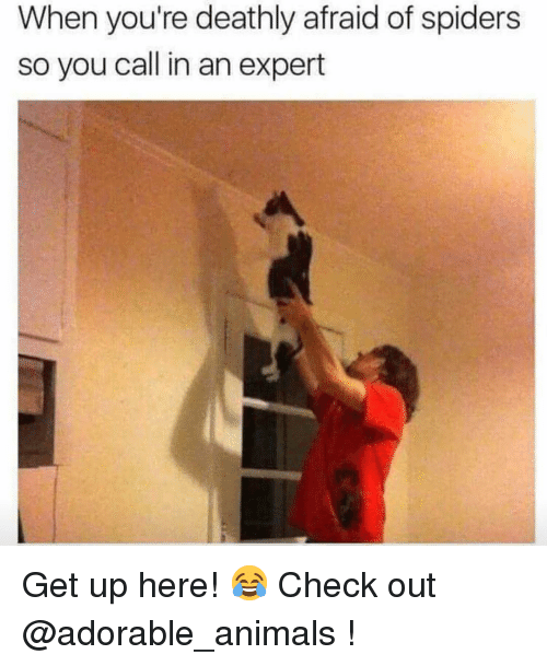 Animals, Memes, and Spiders: When you're deathly afraid of spiders  so you call in an expert Get up here! 😂 Check out @adorable_animals !
