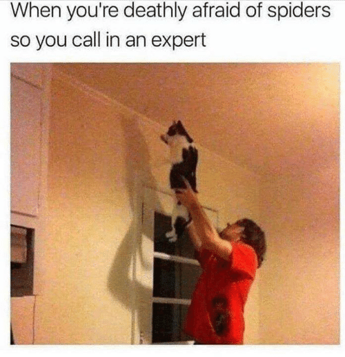 Memes, Spiders, and 🤖: When you're deathly afraid of spiders  so you call in an expert