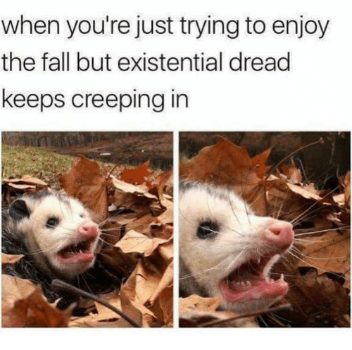 Fall, Memes, and The Fall: when you're just trying to enjoy  the fall but existential dread  keeps creeping in