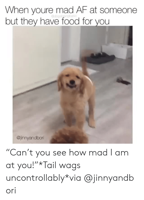 """Af, Food, and Instagram: When youre mad AF at someone  but they have food for you  @jinnyandbor """"Can't you see how mad I am at you!""""*Tail wags uncontrollably*via@jinnyandbori"""