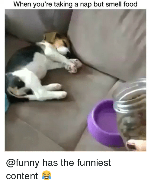 Food, Funny, and Smell: When you're taking a nap but smell food @funny has the funniest content 😂