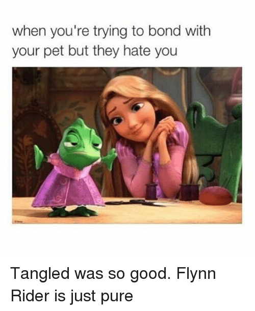 Good, Girl Memes, and Tangled: when you're trying to bond with  your pet but they hate you Tangled was so good. Flynn Rider is just pure