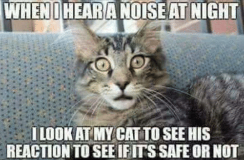 Memes, 🤖, and Cat: WHENIHEARA NOISE AT NIGHT  I LOOK AT MY CAT TO SEE HIS  REACTION TO SEE IFITSSAFE OR NOT