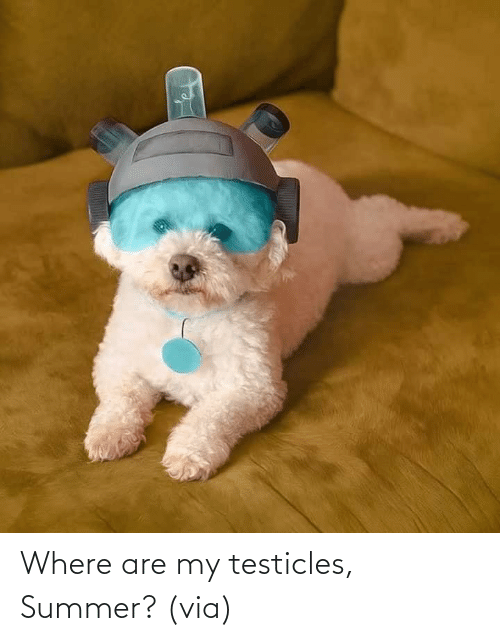 Where: Where are my testicles, Summer? (via)
