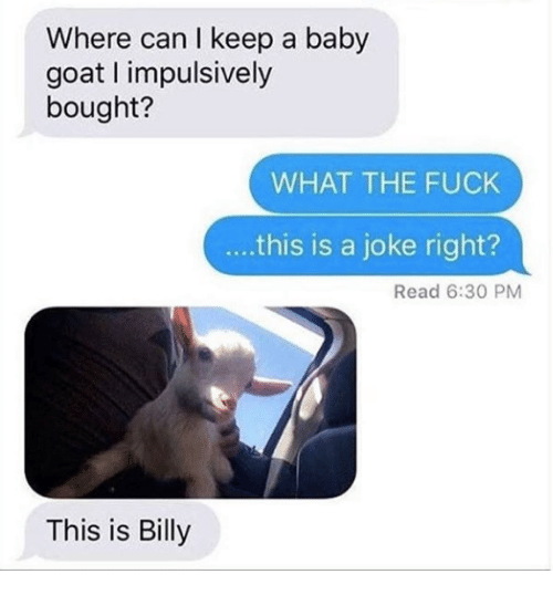 Baby Goat: Where can I keep a baby  goat impulsively  bought?  WHAT THE FUCK  ....this is a joke right?  Read 6:30 PM  This is Billy