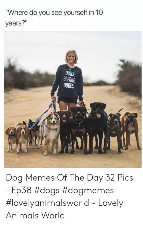 "Animals, Dogs, and Memes: ""Where do you see yourself in 10  years?""  DOGS  BEFORE  DUDES Dog Memes Of The Day 32 Pics – Ep38 #dogs #dogmemes #lovelyanimalsworld - Lovely Animals World"