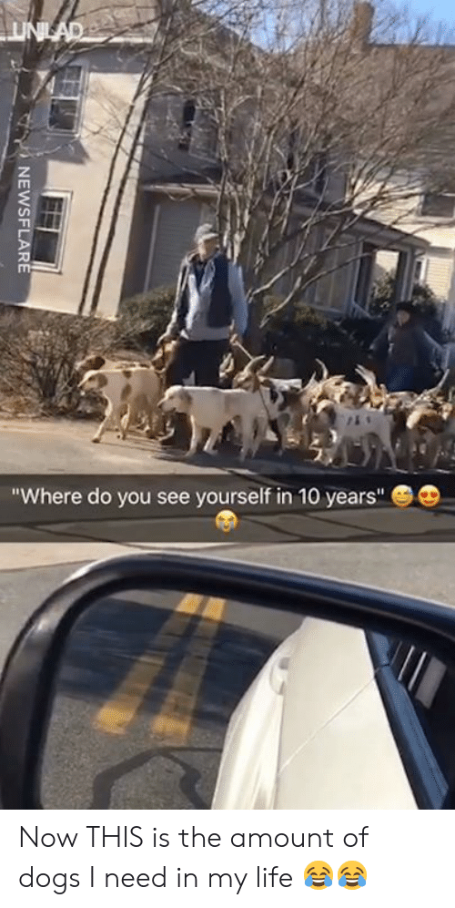 """Dank, Dogs, and Life: Where do you see yourself in 10 years"""" Now THIS is the amount of dogs I need in my life 😂😂"""