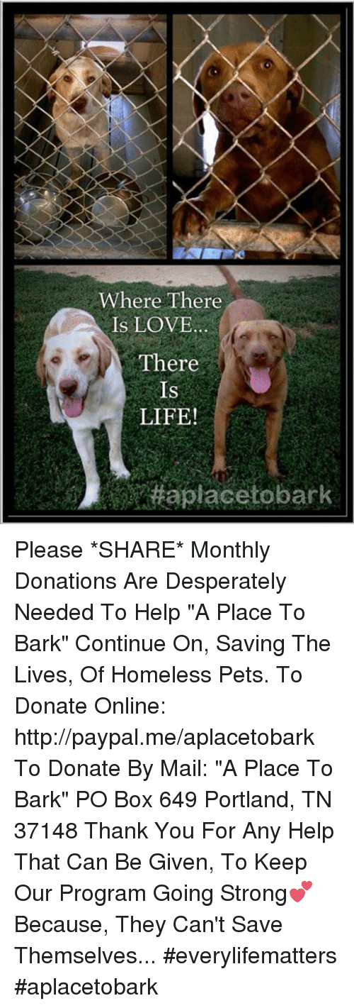 """Boxing, Desperate, and Homeless: Where There  IS LOVE  There  IS  LIFE! Please *SHARE* Monthly Donations Are Desperately Needed To Help """"A Place To Bark"""" Continue On, Saving The Lives, Of Homeless Pets.   To Donate Online: http://paypal.me/aplacetobark  To Donate By Mail:  """"A Place To Bark"""" PO Box 649 Portland, TN 37148  Thank You For Any Help That Can Be Given, To Keep Our Program Going Strong💕 Because, They Can't Save Themselves... #everylifematters #aplacetobark"""