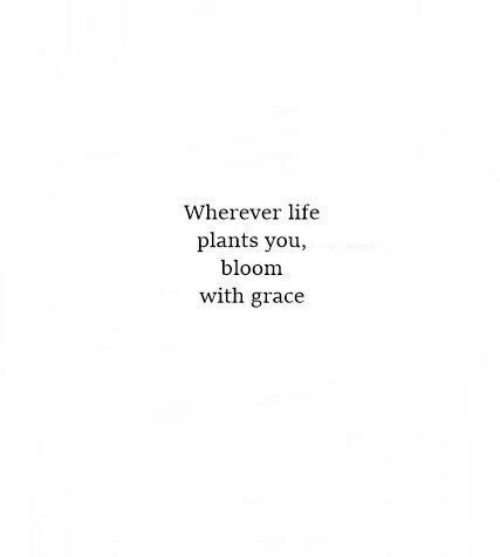 Wherever: Wherever life  plants you,  bloom  with grace