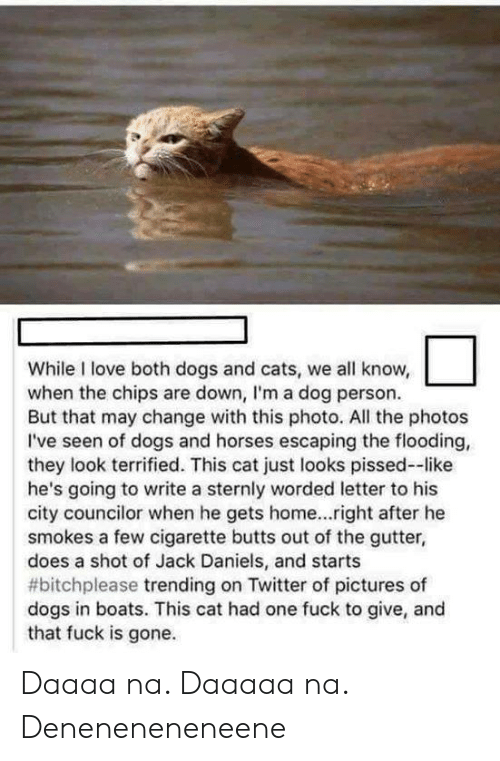 Cats, Dogs, and Horses: While I love both dogs and cats, we all know,  when the chips are down, I'm a dog person.  But that may change with this photo. All the photos  I've seen of dogs and horses escaping the flooding,  they look terrified. This cat just looks pissed--like  he's going to write a sternly worded letter to his  city councilor when he gets home...right after he  smokes a few cigarette butts out of the gutter,  does a shot of Jack Daniels, and starts  #bitchplease trending on Twitter of pictures of  dogs in boats. This cat had one fuck to give, and  that fuck is gone. Daaaa na. Daaaaa na. Deneneneneneene