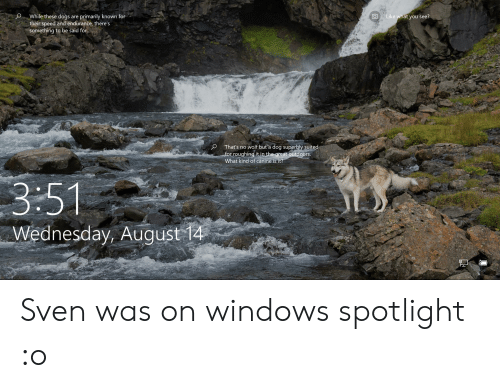 Dogs, Windows, and Wednesday: While these dogs  their speed and endurance, there's  something to be said for..  Like what you see?  primarily known for  are  That's no wolf but a dog superbly suited  for roughing it in the great outdoors.  What kind of canine is it?  3:51  Wednesday, August 14 Sven was on windows spotlight :o