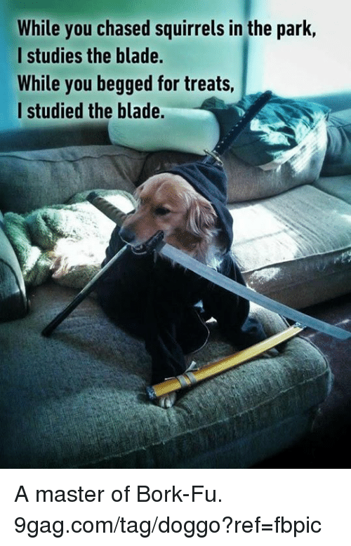9gag, Blade, and Dank: While you chased squirrels in the park,  I studies the blade.  While you begged for treats  l studied the blade. A master of Bork-Fu. 9gag.com/tag/doggo?ref=fbpic