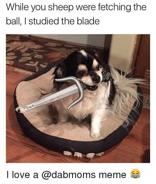 Studying The Blade: While you sheep were fetching the  ball, I studied the blade  dabmoms I love a @dabmoms meme 😂