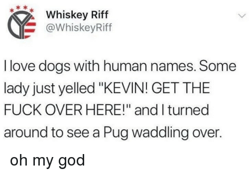 "Dogs, God, and Love: Whiskey Riff  @WhiskeyRiff  I love dogs with human names. Some  lady just yelled ""KEVIN! GET THE  FUCK OVER HERE!"" and I turned  around to see a Pug waddling over. oh my god"