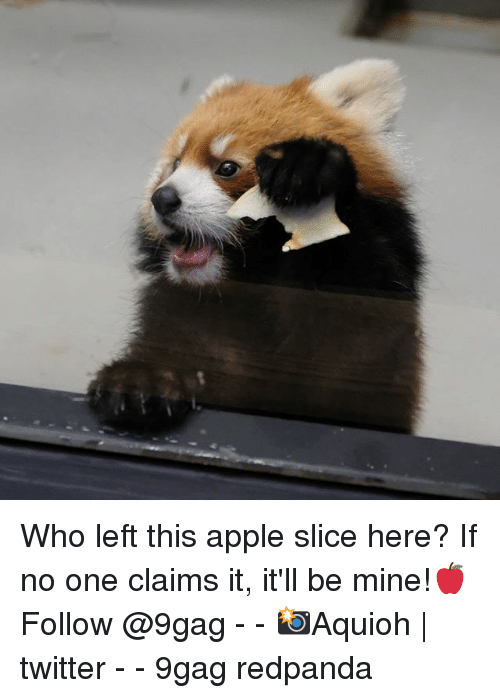 9gag, Apple, and Memes: Who left this apple slice here? If no one claims it, it'll be mine!🍎Follow @9gag - - 📸Aquioh | twitter - - 9gag redpanda