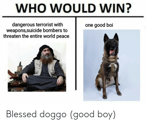 good boy: WHO WOULD WIN?  dangerous terrorist with  weapons,suicide bombers to  threaten the entire world peace  one good boi Blessed doggo (good boy)