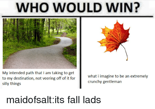 Fall, Tumblr, and Blog: WHO WOULD WIN?  My intended path that I am taking to get  to my destination, not veering off of it for  SI  what i imagine to be an extremely  crunchy gentleman  silly things maidofsalt:its fall lads